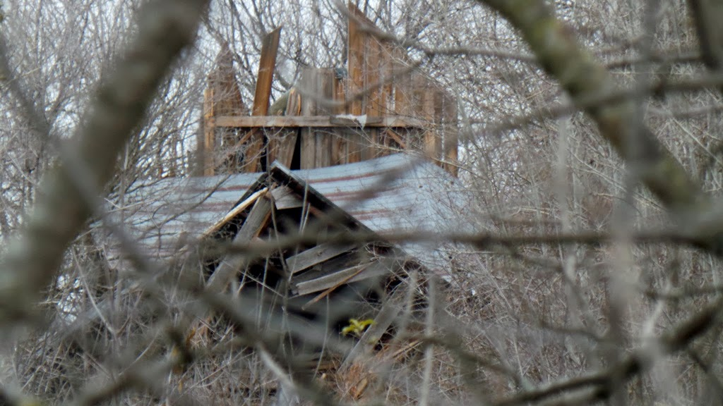View of the collapsed barn through the trees