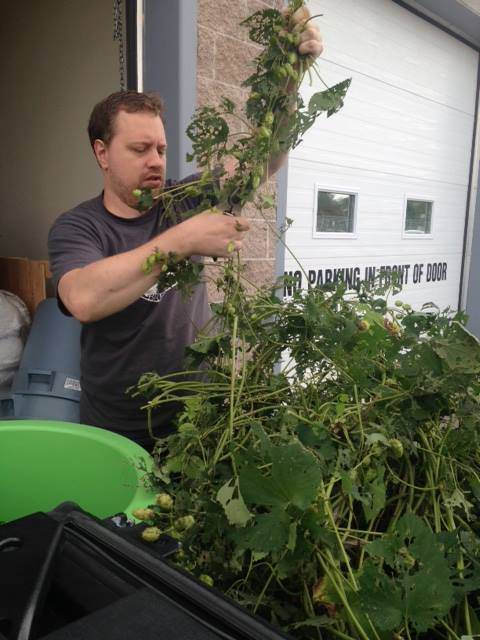 Steve, a friend of the vanDyk's, helps with the hops. 'Wiches Brew features fresh hops from a farm in Perth and from the vanDyk's backyard.