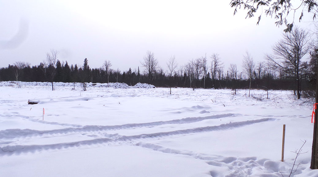 Part of the land cleared recently at 6279 Fernbank Road, south of Elm Crescent. Photo taken February 14, 2015.