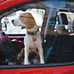 'Reckless behaviour' leaving pets in hot cars