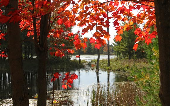 Beaver Pond in Fall by J. Mason