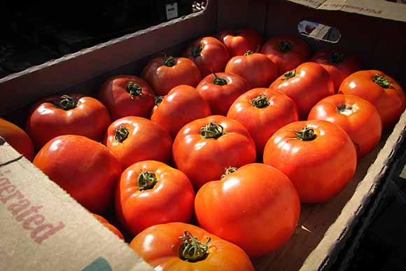 STITTSVILLE, ON. Sept 16, 2015.  Produce from the  Black Family Farm for the Ottawa Food Bank.  Barry Gray/StittsvilleCentral