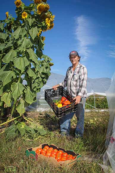 STITTSVILLE, ON. Sept 16, 2015.  Tom Black of Black Family Farm in front of greenhouses with produce for the Ottawa Food Bank.  Barry Gray/StittsvilleCentral