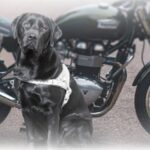 Ride your motorcycle to support guide dog training