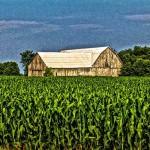 PHOTO: Corn/Barn