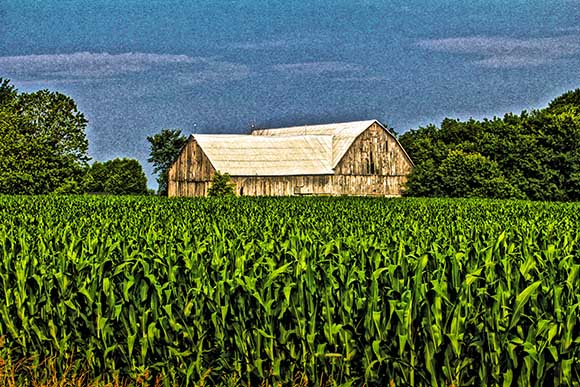 Corn/Barn. Photo by Barry Gray.