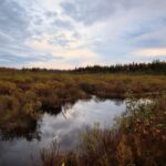Nature right on our doorstep – October's observations by Jessie Lozanski