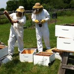 Munster beekeeper wins Awesome Ottawa grant