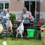Granite Ridge residents experience 'Country Fair' at home