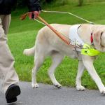 Guide dog training has had to adapt during pandemic
