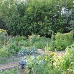 Ottawa's master gardeners partner with OPL to share their green thumb expertise