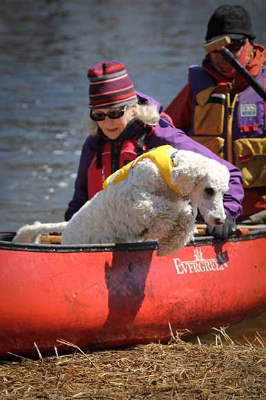 Going to the dogs on the Jock River. Barry Gray (StittsvilleCentral)