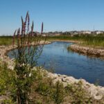 Discover the Carp River Conservation Area