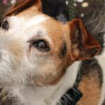 Foster volunteers needed by the animals