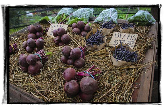 PAZAB FAMILY FARM, August 3, 2015.  Beets and beans    Barry Gray (For StittsvilleCentral.com)