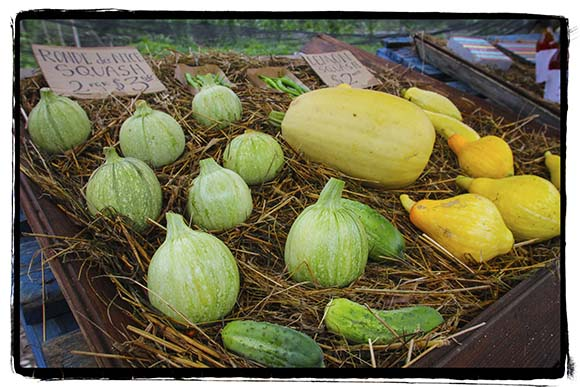 PAZAB FAMILY FARM, August 3, 2015.   Different kinds of squash for sale.  Barry Gray (For StittsvilleCentral.com)