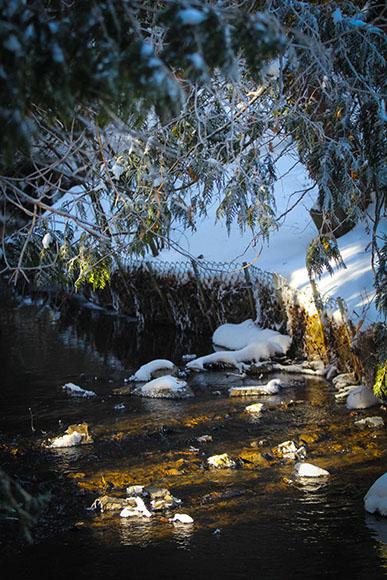 Winter walk along Poole Creek. Photo by Barry Gray