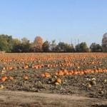 The weekend is here again – from pumpkin patches to Budget 2020 – events not to be missed