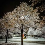 PHOTO: Snow tree
