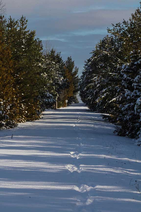 STITTSVILLE, ON. Dec.6 2016. Single path on the Trans Canada Trail. Barry Gray (StittsvilleCentral).