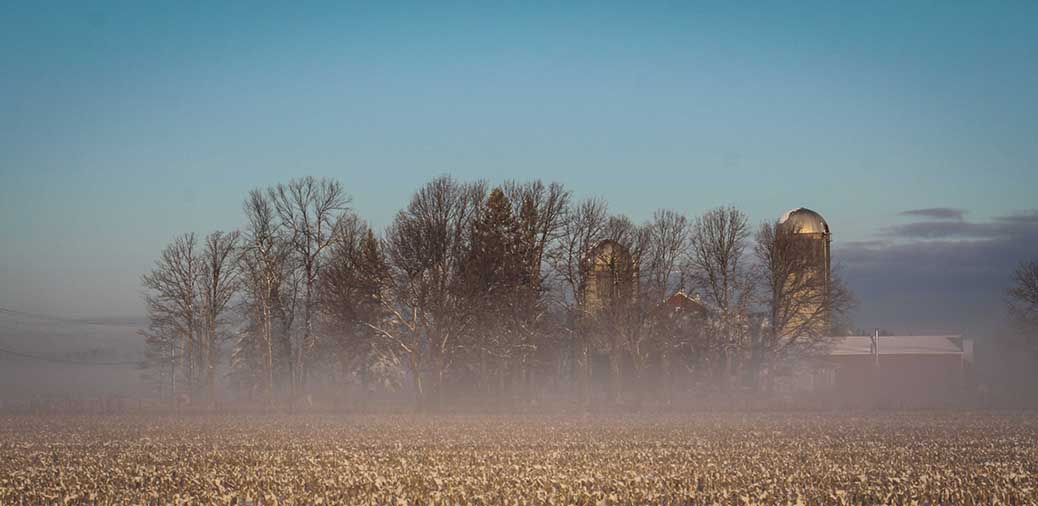 STITTSVILLE, ON. Dec 6, 2016. Fog in cornfields. Barry Gray (Stittsvillecentral).