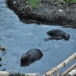 Ottawa-Carleton Wildlife Centre pens strong letter to Mayor and Councillors on City beaver issues
