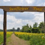 Sultan Farm and Sanctuary sunflower field abuzz with guests from far and wide – yes bees too