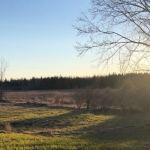 Another chapter from the Sultan family – life on a sanctuary farm