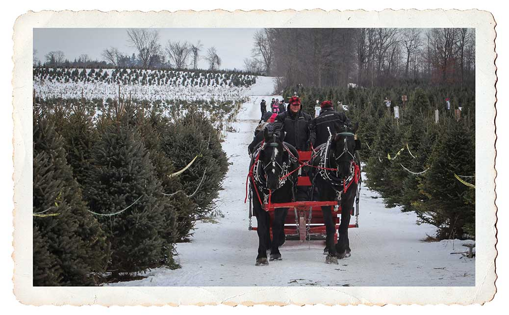 NORTH GOWER, ON. Dec 11, 2016. Sleigh rides to the back part of Thomas Tree Farm. Barry Gray (StittsvilleCentral)