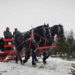 PHOTOS: Christmas tree farms near Stittsville