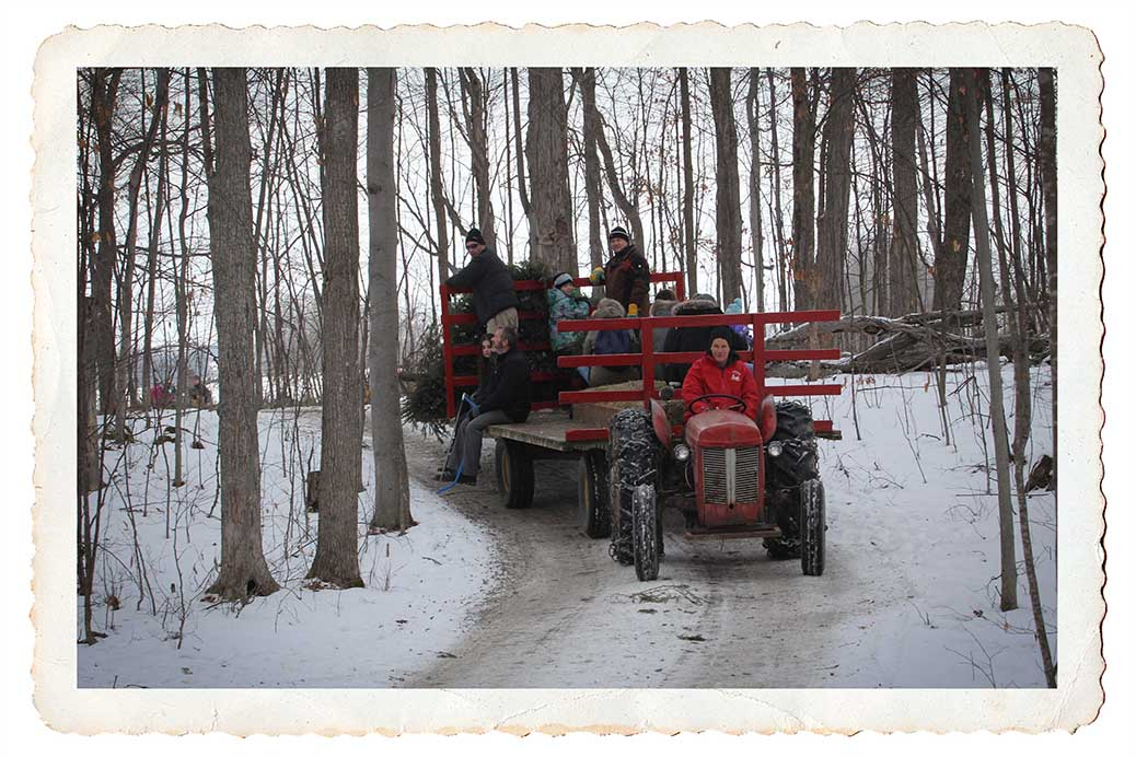 NORTH GOWER, ON. Dec 11, 2016. Tractor bring back trees and people from the tree farm. Barry Gray (StittsvilleCentral)