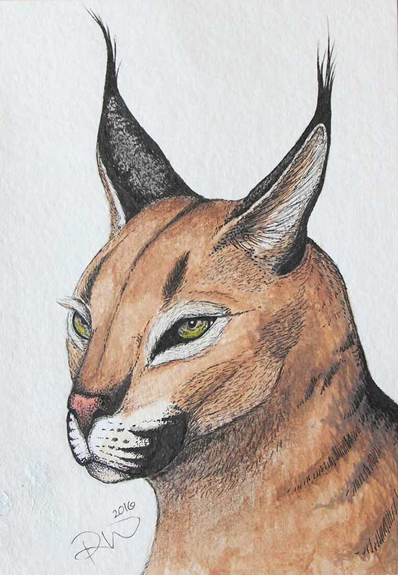 Caracal, watercolour and archival ink by Rebecca Woodrow. Photo by Barry Gray.