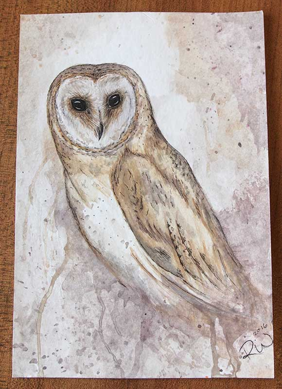 Barn Owl, watercolour by Rebecca Woodrow. Photo by Barry Gray.