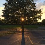 PHOTO: Sunset tree at ALC