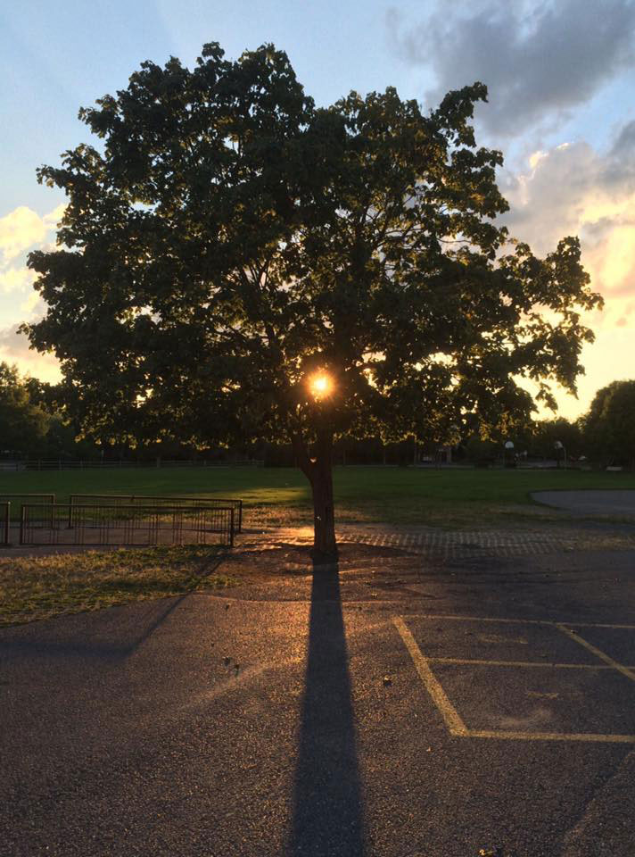 Sunset and tree at A. Lorne Cassidy. Photo by Rob Hambly