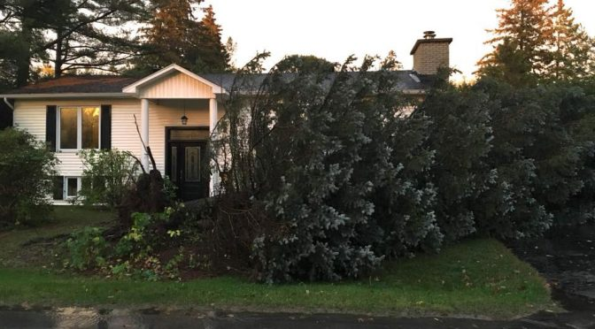 """Mike Alexander posted this pic on Facebook: """"Anyone want a REALLY big Christmas tree? Come get it!"""" It clipped the corner of his garage but didn't cause any serious damage. It also missed his dad's truck parked in the driveway."""