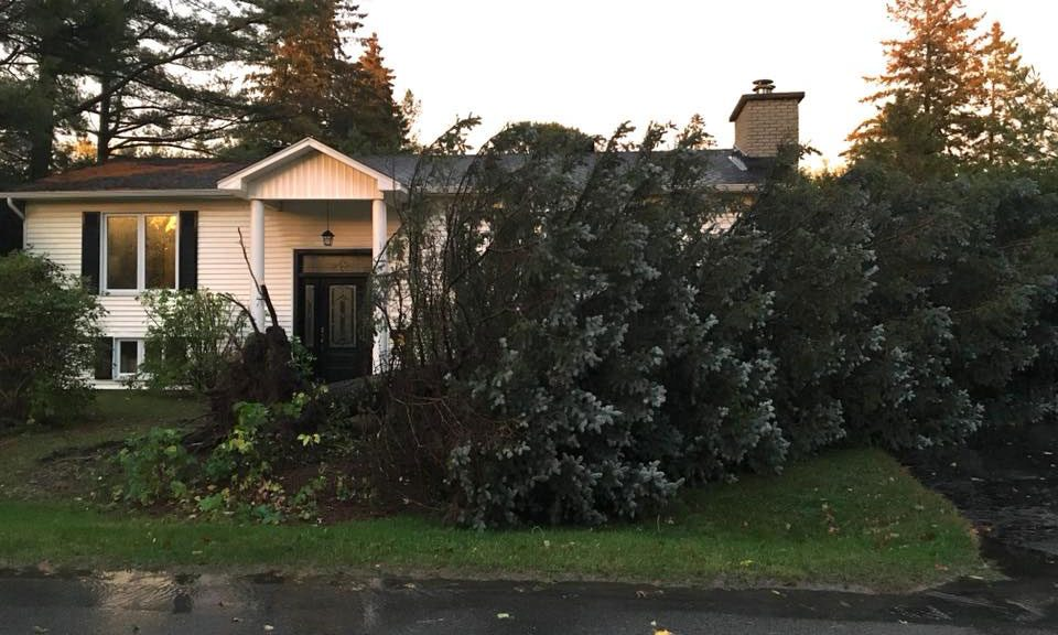 "Mike Alexander posted this pic on Facebook: ""Anyone want a REALLY big Christmas tree? Come get it!"" It clipped the corner of his garage but didn't cause any serious damage. It also missed his dad's truck parked in the driveway."