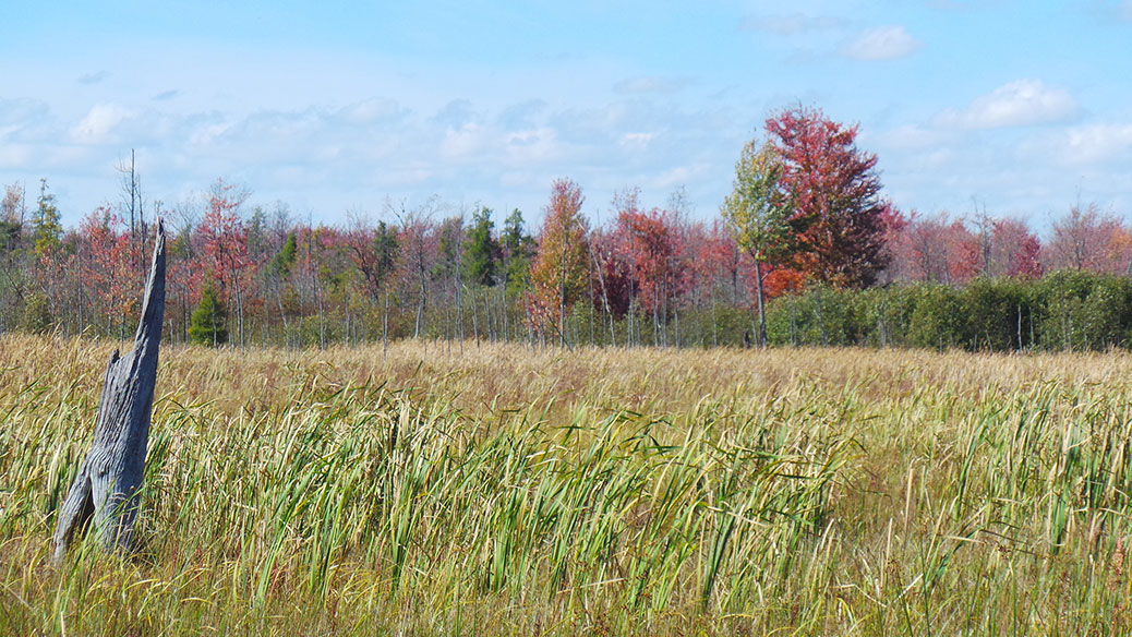 Autumn in the Marsh. September 2013 / Photo by Glen Gower