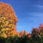 PHOTOS: A collection of autumn colours