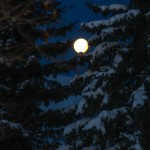 PHOTO: Full moon through snowy pines