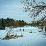 PHOTO: Pond rink off Beverly Street