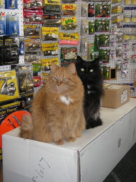 Simon and Garfunkel inspect every shipment that comes through the door at Bits and Baits.