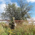 Crab apple tree leads archeologists to a lost farm near Tanger