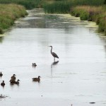 Something fishy with Carp River pathway plan, say observers