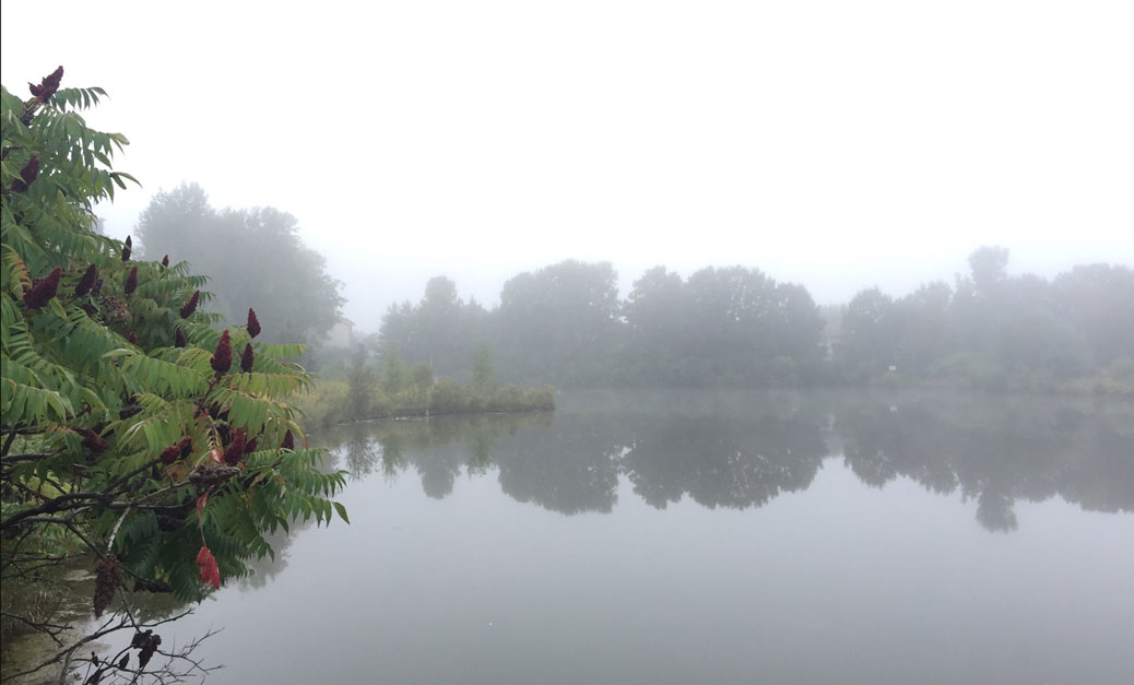 A misty morning at the Granite Ridge stormwater pond. Photo by Stephany Castilla on Wednesday, September 6.