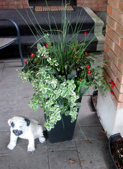 Arthur the cement dog lived in Katimavik next to his friend the potted plant.