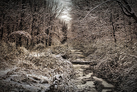 Snow covered trees along a creek on Flewellyn Road.  Photo by Barry Gray.