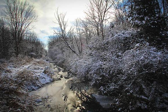 Creek on Flewellyn Road.  Photo by Barry Gray.