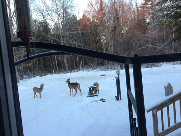 Neighbour Joe Trudeau took this photo prior to this week, showing a family of deer who live on the Fernbank property.  Residents are concerned about loss of habitat for wildlife on the land.