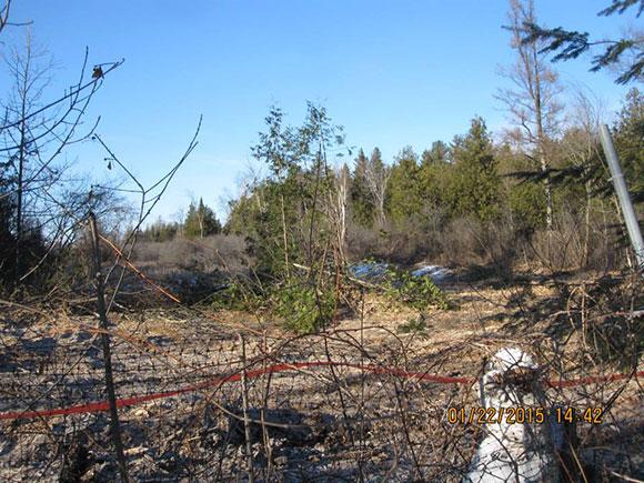 Tree clearing behind the McKim property next door on Fernbank